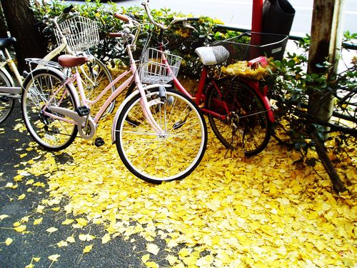 Gingko and bikes
