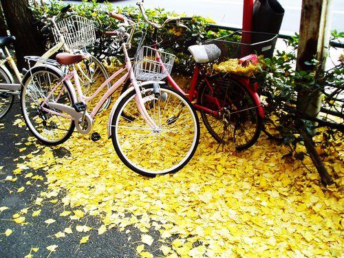 Gingko and bikes