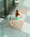 Colourful_dog