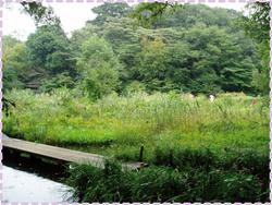 Nature_park