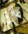 Tsukiji_fish